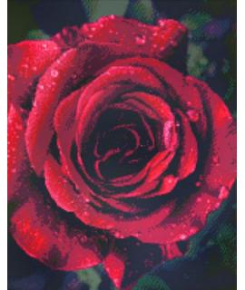 Алмазная вышивка Роза с каплями росы 40х50 см Идейка AM6019