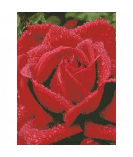 Алмазная вышивка Душистая роза Идейка AM6100