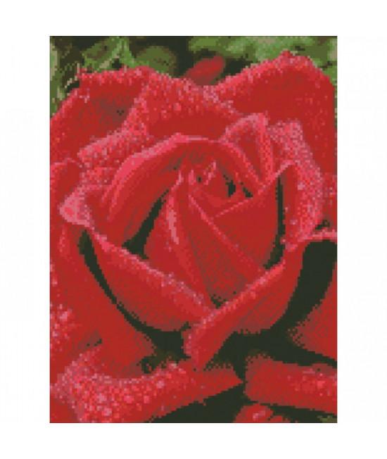 Алмазная вышивка Душистая роза 30х40 см Идейка AM6100