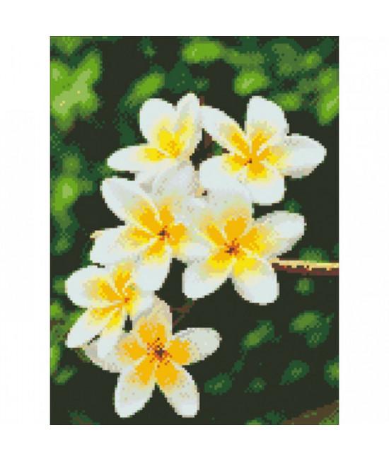 Алмазная вышивка Гавайский цветок 30х40 см Идейка AM6105